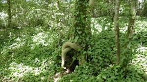 Un arbre assis