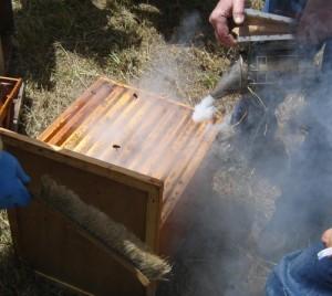 Enfumage d'une ruche