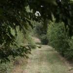 Le sentier verdoyant