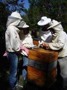Les apiculteurs au travail
