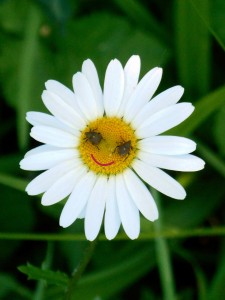 Marguerite smiley