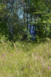 Orchidées avec lac en contrebas