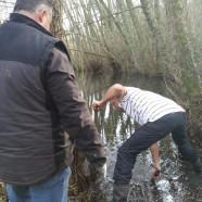 Entretien des abords du lac